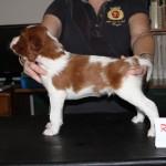 4 weeks - Rufus (1)