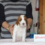 Bruno 3 weeks (3)