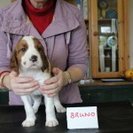 Bruno 5 weeks (1)