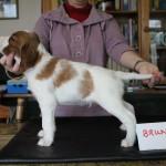 Bruno 5 weeks (3)