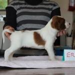 Eros 3 weeks (1)