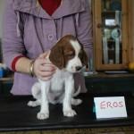 Eros 5 weeks (1)