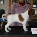 Eros 5 weeks (3)