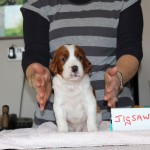 Jigsaw 3 weeks - wont co-operate! (3)