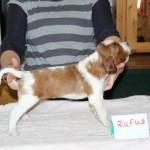 Rufus 3 weeks (2)