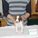 Rufus 3 weeks (3)