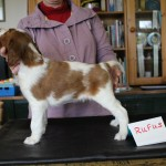 Rufus 5 weeks (3)