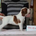 Trio 3 weeks, v smart little man (3)