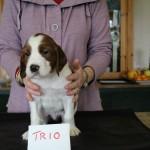 Trio 5 weeks (1)
