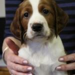 Rufus - 6 weeks (6)