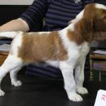 Rufus - 6 weeks (7)