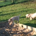 Ruby and Rudi