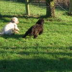 Rudi and Lottie playing in the sun (1)