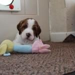 My toy (2)